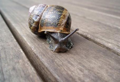 garden-snail-2